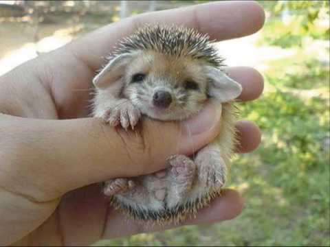 Goats, chickens, rabbits and now … a hedgehog!